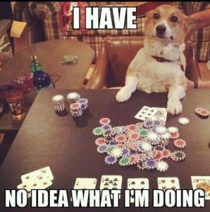 gambling corgi